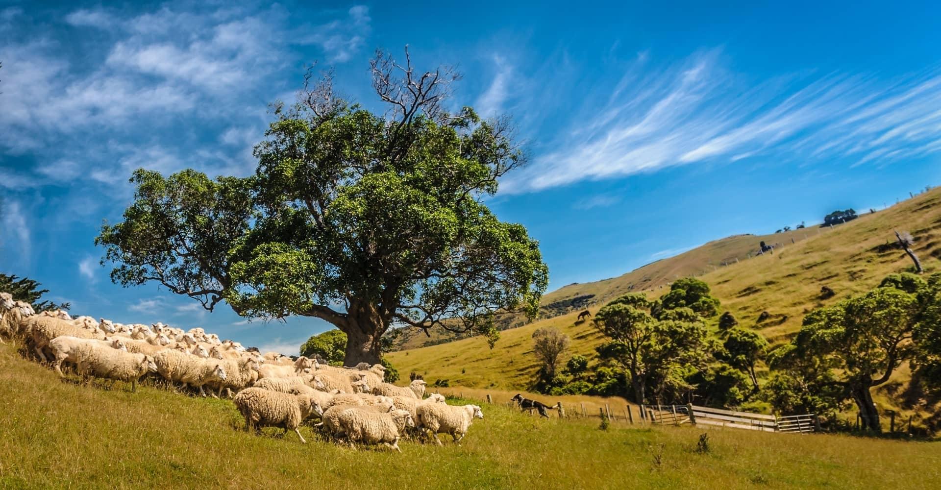 The Shepherd in The Tree Terry Neudorf